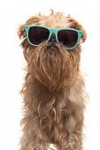 Dog ready for vacation isolated on white background poster