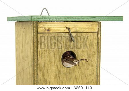 Tomtit Entering Wooden Bird House