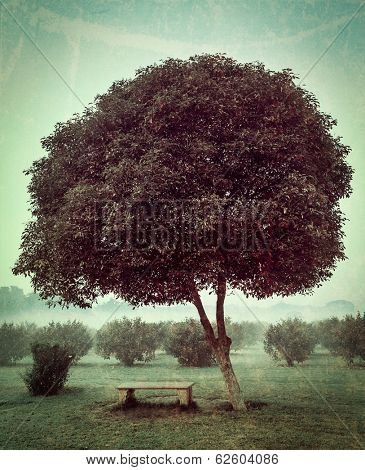 Vintage retro hipster style travel image of loneliness solitude  sadness background - lonely tree and seating bench in morning mist fog with grunge texture overlaid
