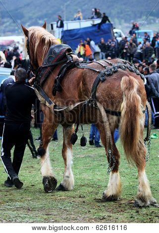 Big Horse And Man