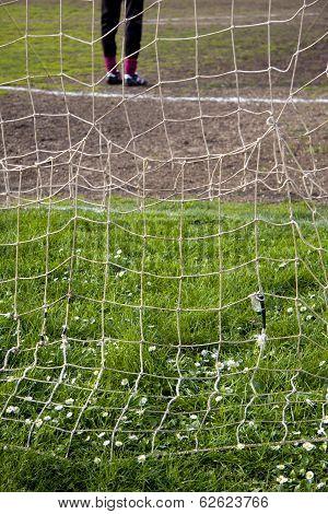 Daisies Behind The Goal Net
