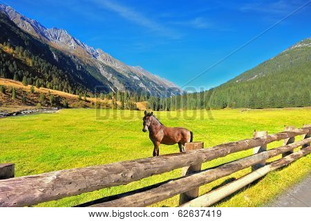Headwaters National Park Krimml waterfalls. Rural pastoral. Farm fields separated from the dirt road the low fence made of logs. Behind the fence stands the rustic horse