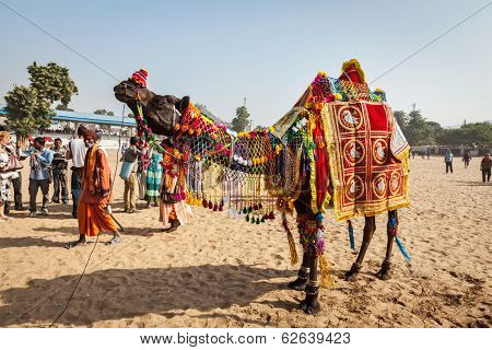 PUSHKAR, INDIA - NOVEMBER 22, 2012: Camel decoration competition contest at Pushkar camel fair (Pushkar Mela) - annual 5 day livestock fair one of world largest camel fairs and tourist attraction