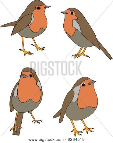 vector of robin in various poses