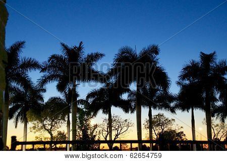 Sunset With Palm Trees In Estero Florida