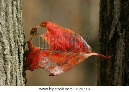 leafhangingon