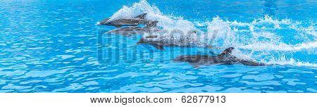 Dolphins Race