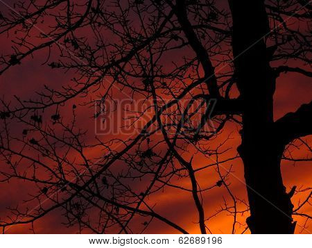 Silouette of tree in dramatic sunset
