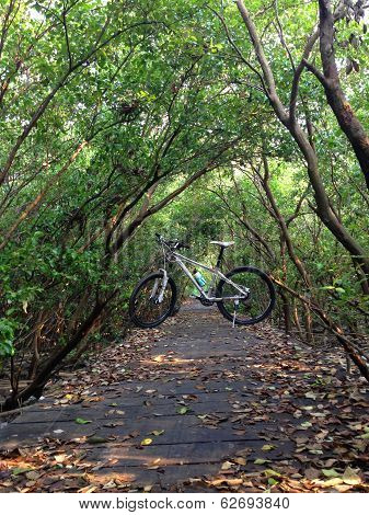The Bike On A Wood Path In Forest