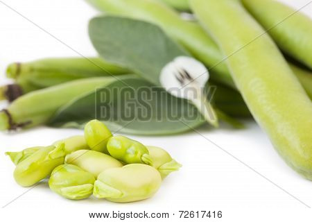 Fave With Flower, Isolated On White Background