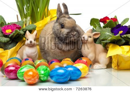 Cute Easter Rabitt Sitting Among Yellow Daffodil, Easter Flowers And Easter Eggs