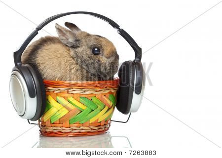 poster of Easter bunny sitting in basket and listening to mp3 music with headphone. Isolated on white background.