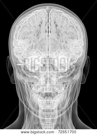 X-ray View Of Human Head Isolated On Black