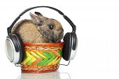 Easter bunny sitting in basket and listening to mp3 music with headphone. Isolated on white background. poster
