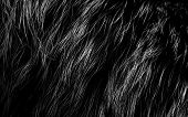 texture of fur. to use as a backgro poster