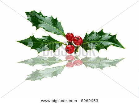 Christmas Holly And Red Berries With Reflection