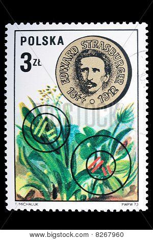 Poland - Circa 1973: A Stamp Edvard Strasburger