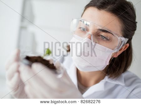 science, biology, ecology, research and people concept - close up of young female scientist wearing protective mask holding petri dish with plant and soil sample in bio laboratory poster