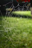 Spider web of an Araneid Spider with dew drops poster