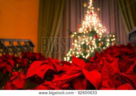 Poinsettia with decorated Christmas tree