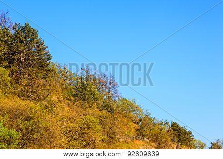 Val Rosandra Vegetation