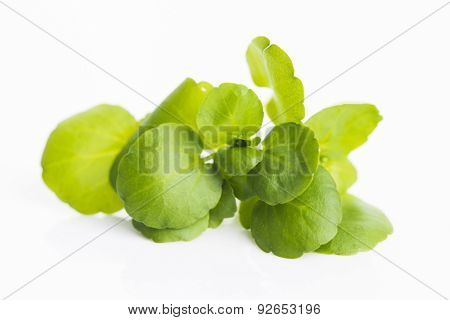 Watercress On White Background