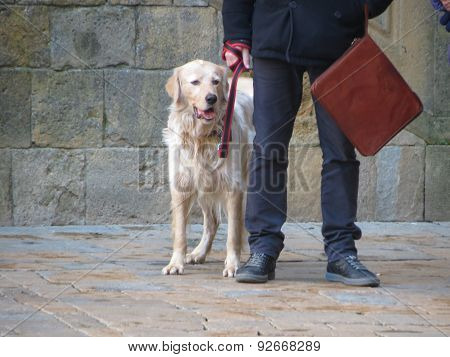 Domestic dog aka Canis lupus familiaris animal of class Mammalia aka mammals with human
