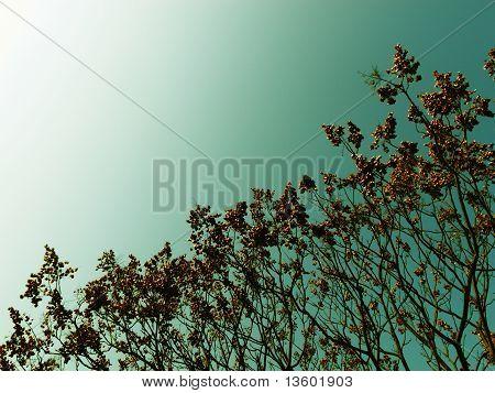 diagonal zen tree