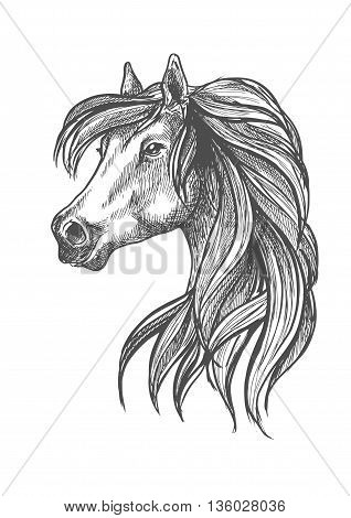 Sketched profile portrait of purebred horse of andalusian breed with head of beautiful adult mare. May be use as show jumping or dressage horse show symbol design