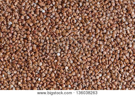 raw buckwheat, buckwheat macro photo, buckwheat grains, buckwheat background, dry buckwheat, organic buckwheat, brown buckwheat