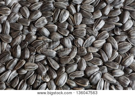 sunflower seeds, sunflower grains, seed shell, sunflower seeds background. sunflower seeds photo, black shell, raw seeds