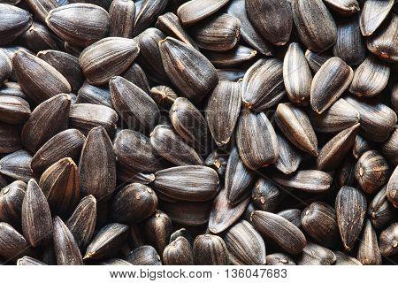 sunflower seeds, sunflower grains, seed shell, sunflower seeds background. sunflower seeds photo, black shell, raw seeds