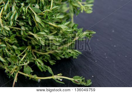 fresh green thyme, Thymus vulgaris, on a dark slate background with copy space