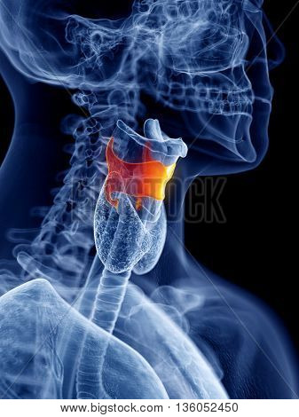 3d rendered, medically accurate illustration of the thyroid cartilage