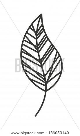 nature leaf  isolated icon design, vector illustration  graphic