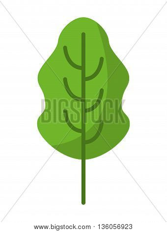 leaf fresh vegetable isolated icon design, vector illustration  graphic