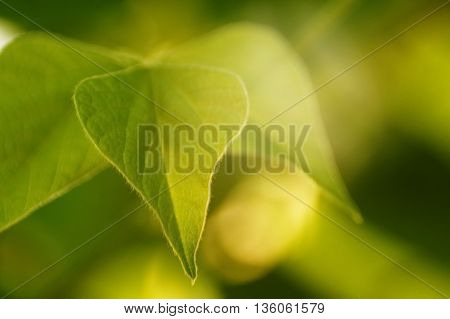 Green leaf with spot of light from sun leaf pattern on blurred background