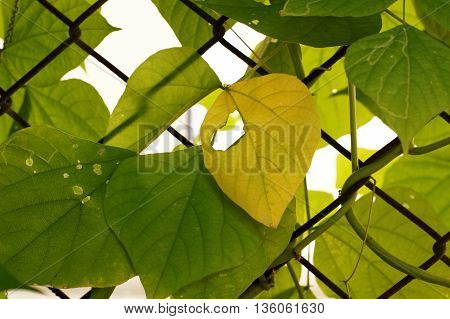 Yellow leaf on green leaf pattern background