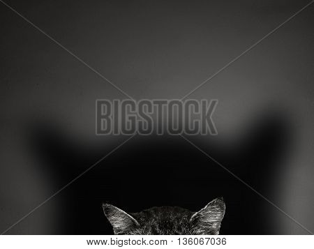 the cat ears on gray background concept