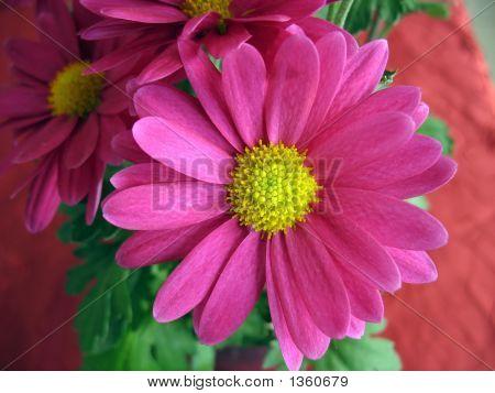 Pinkish Violet Flower