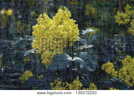 Oregon Grape Mahonia Aquifolium flowers in the Spring - Photo made with canvas texture effect