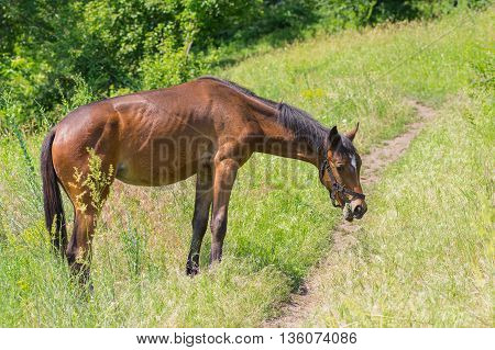 Lonely horse having lunch in fresh summer grass