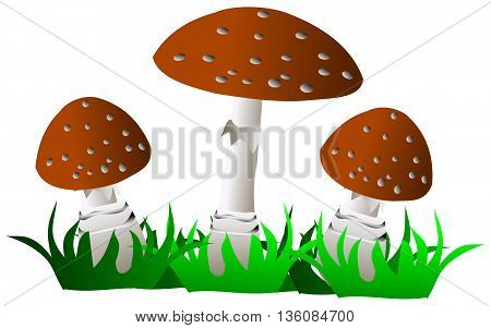 toadstool , brown mushroom , three toadstools