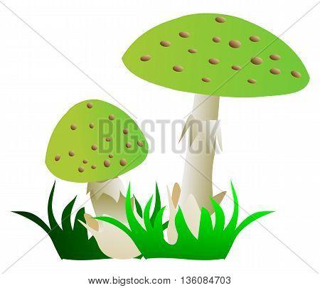 toadstool , green mushroom , two toadstools