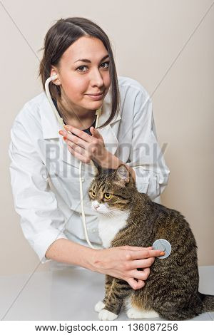 Veterinary doctor holding a big grey cat