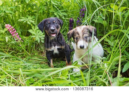 Two small dogs play in the tall grass