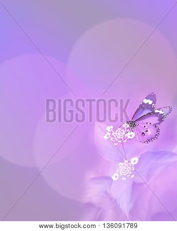 Monarch Butterfly on purple background for sympathy and symbol of life hope soul and resurrection