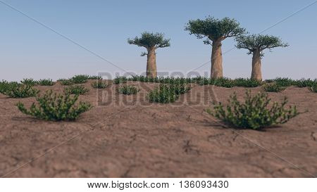 3d illustration of group of madagascar baobab trees
