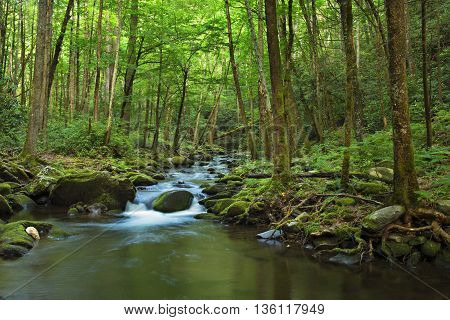 Little Pigeon River.Water cascades over boulders covered in green moss. Smoky Mountains National Park.