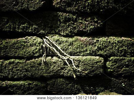 Filtered : Brick stone with green moss and tree root grow between cleft of brick block.